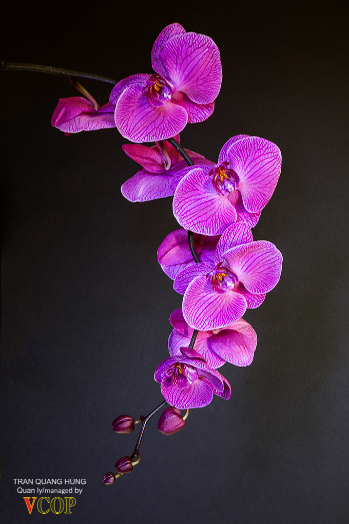 Orchids_783b9513s