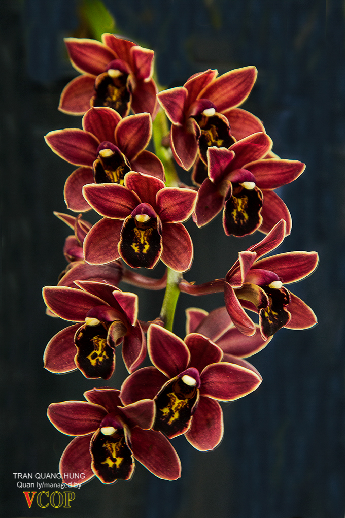Orchids_783b9723s