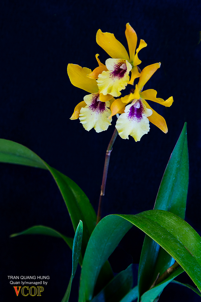 Orchids_783b9811s